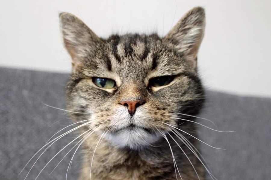 Le chat le plus âgé du monde a vécu 38 ans