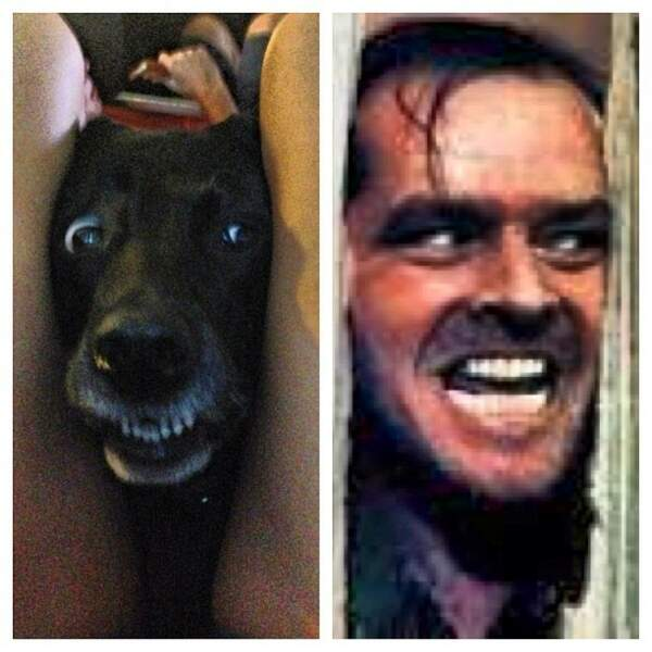 """""""The Shining"""" version canine"""
