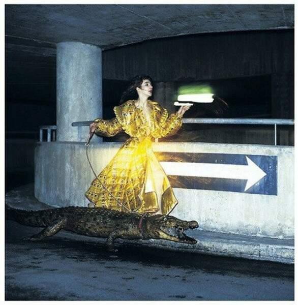 Le crocodile, nouveau moyen de transport en Australie ?