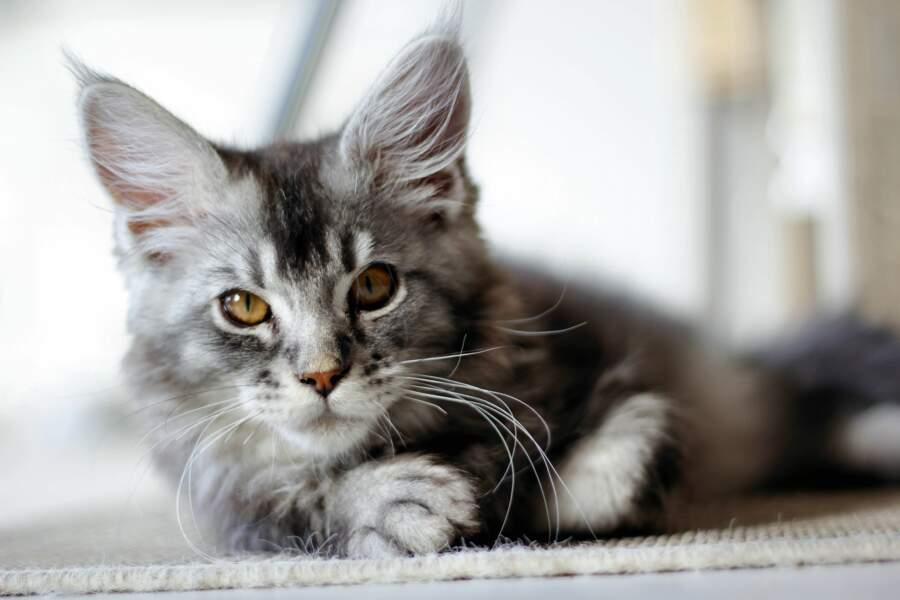 Les chats détectent les tremblements de terre avant nous