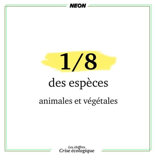 1 espèce animale ou végétale sur 8 est menacée d'extinction imminente