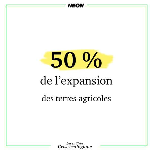 50% de l'expansion des terres agricoles se fait aux dépens de la forêt