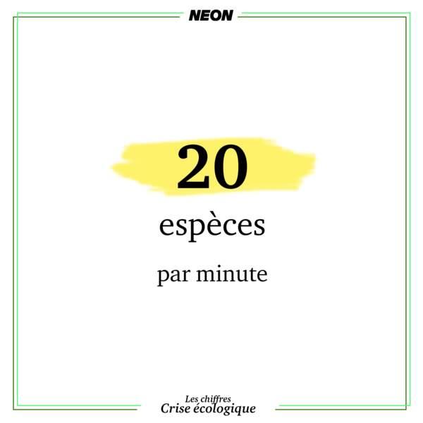 Une espèce animale ou de plante disparaît toutes les 20 minutes