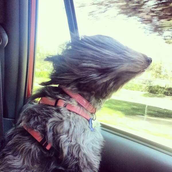 Un chien à la portière
