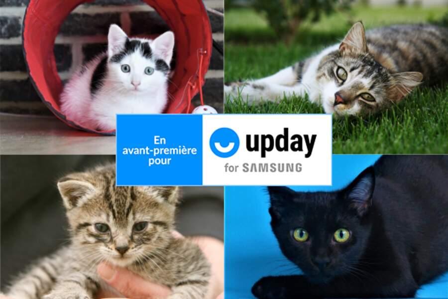 20 infos incroyables sur les chats