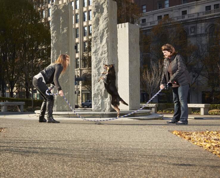 Record du nombre de sauts à la corde effectués par un chien en une minute