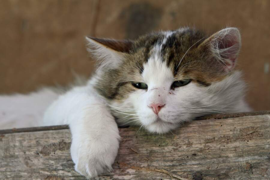 Rome est la ville qui compte le plus de chats errants