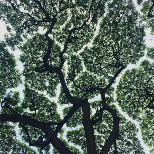 ... en effet, le même phénomène a été observé avec les racines !