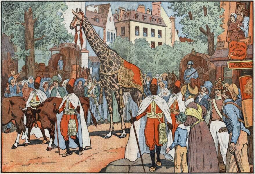 Une girafe pour le roi… et ses sujets