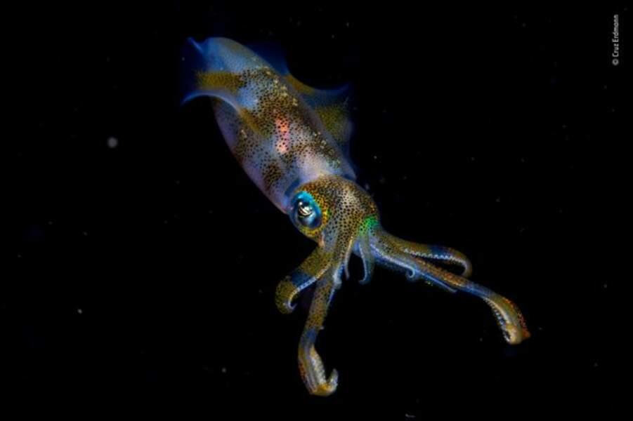 Un calamar dans la nuit, une lueur dans les profondeurs