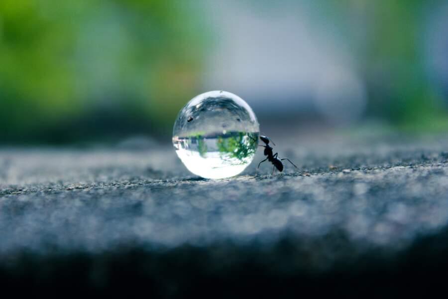 Les fourmis pour les GPS