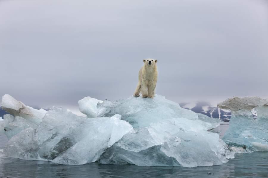 Les ours blancs pour une bouilloire économe