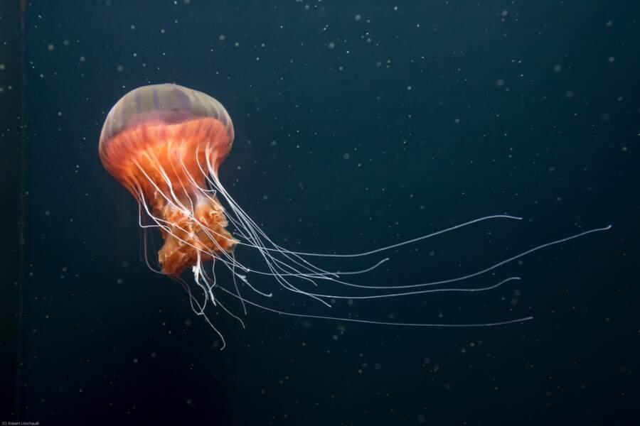 Les méduses pour les couches-culottes biodégradables