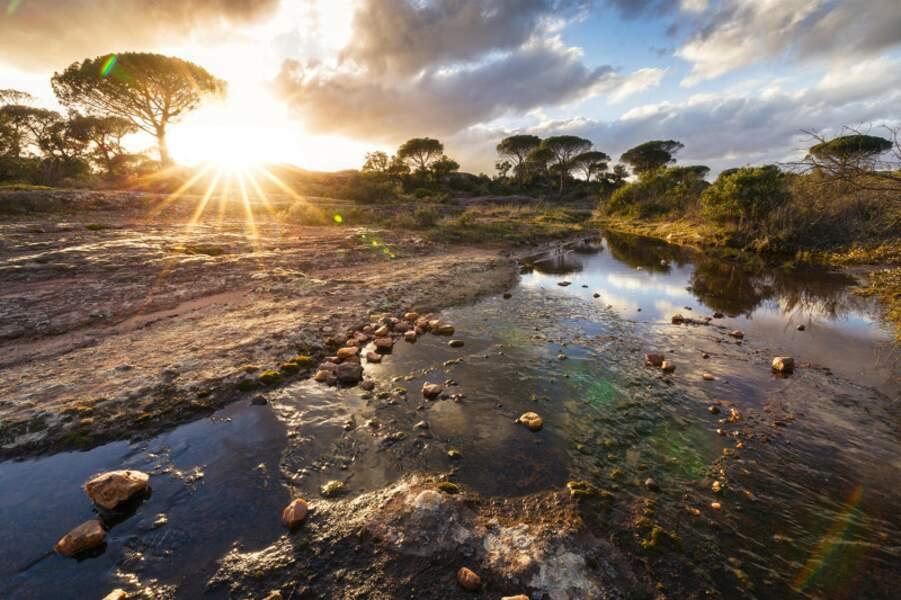 La réserve naturelle de la plaine des Maures, au coucher du soleil, Var