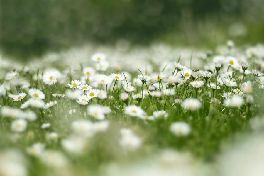 Des parterres de fleurs