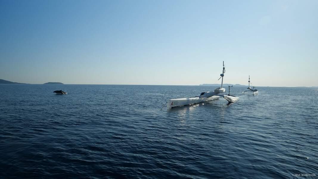 Dauphin autour du navire Sphyrna Odyssey pendant la mission Quiet Sea