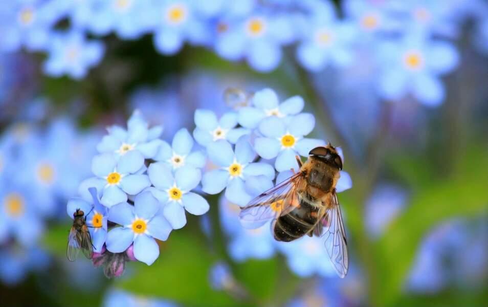L'abeille a la bosse des maths