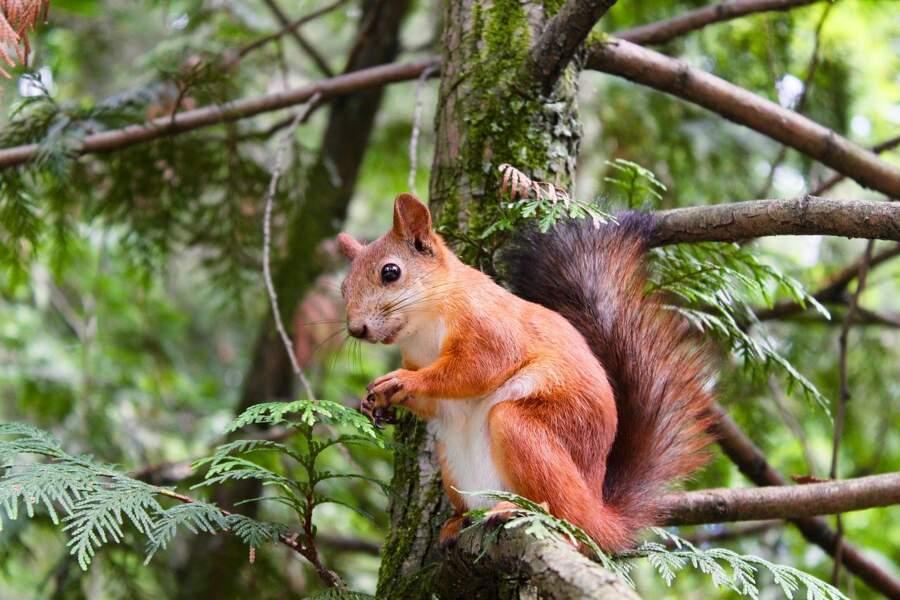L'écureuil a bonne mémoire
