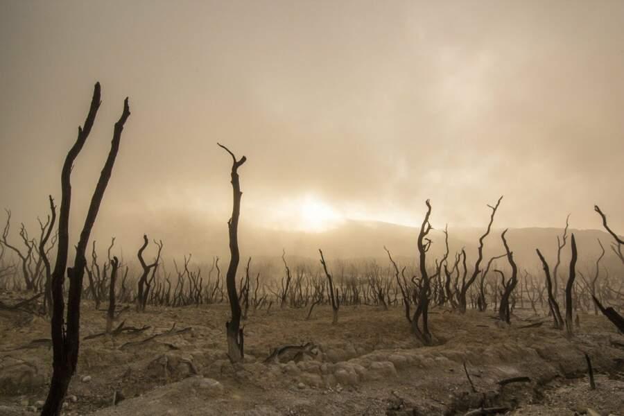 Les experts manipulent les données pour favoriser un scénario catastrophe