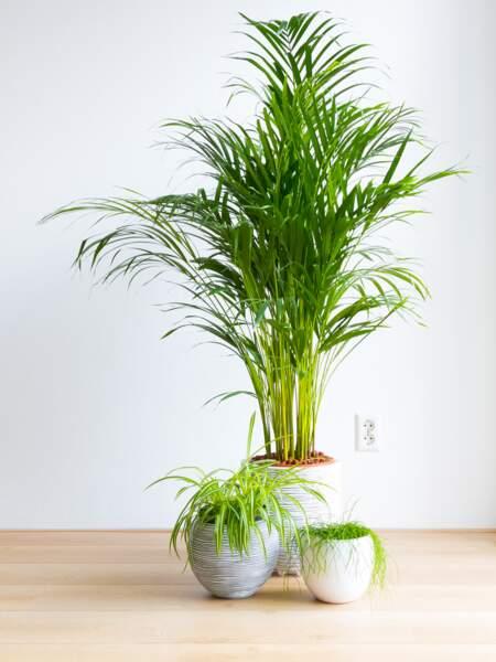 Plantes dépolluantes : un sujet parfois irritant