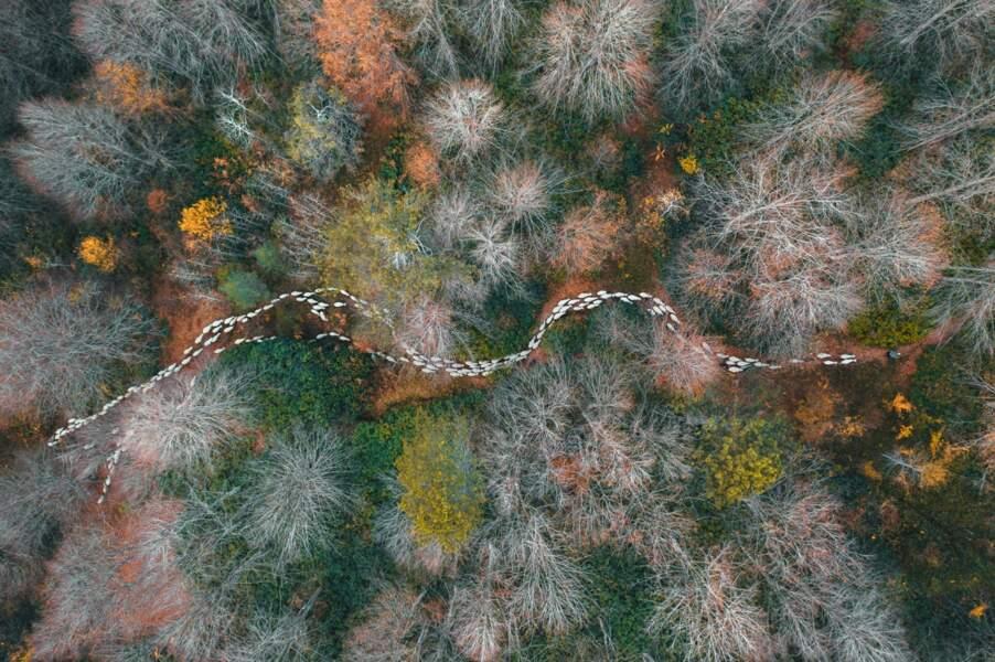 Un chemin en forêt