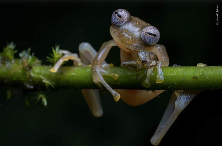 """La photo gagnante de la catégorie """" Comportement : Amphibiens et reptiles"""""""