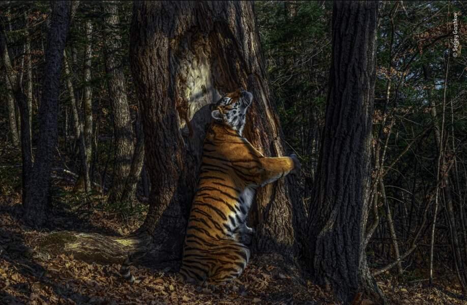 Sergey Gorshkov, le photographe nature de l'année 2020