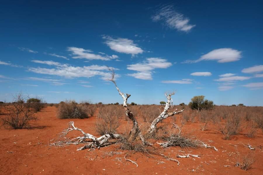 Les mystérieuses ruines du Kalahari de Gilarmi Farini
