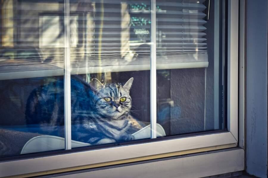 Garder son chat à l'intérieur