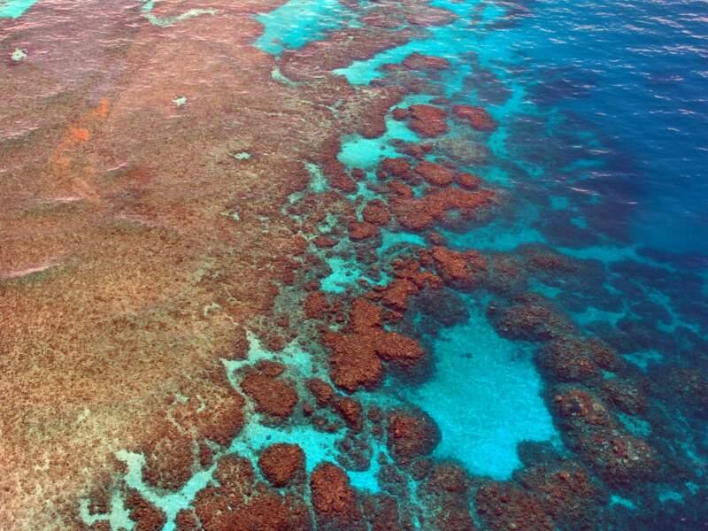 La découverte du plus grand récif de corail du monde