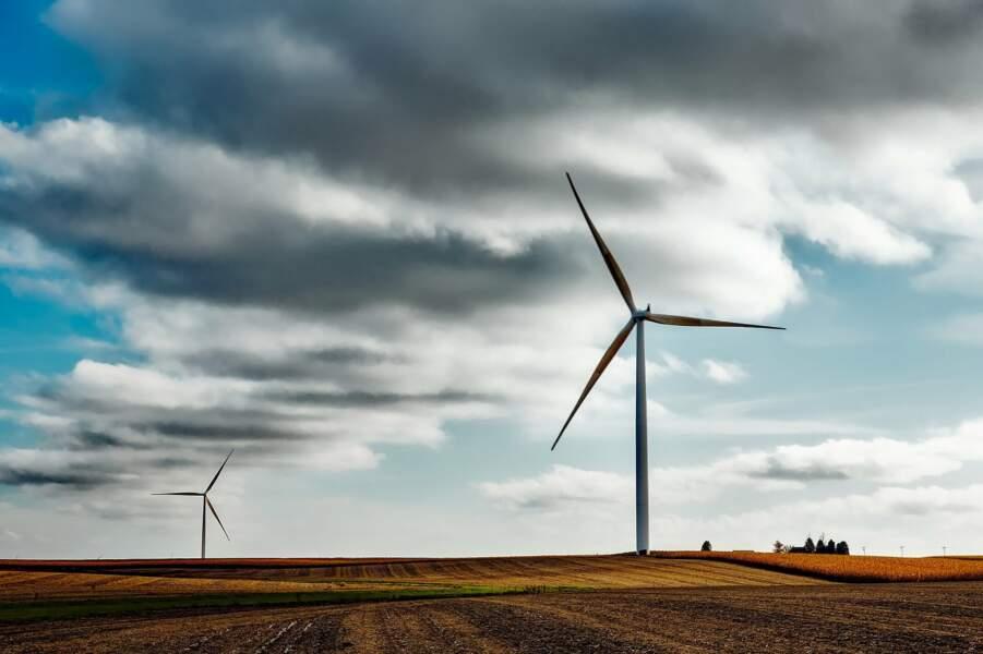 Un parc éolien pour réduire la mortalité des chauves-souris