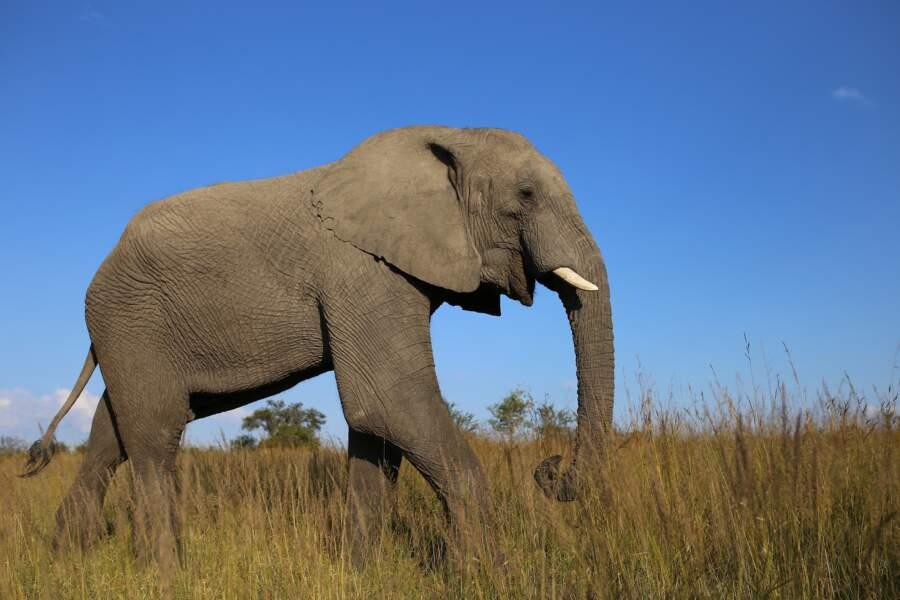 Les réserves naturelles du Zimbabwe protégées de tout projet minier
