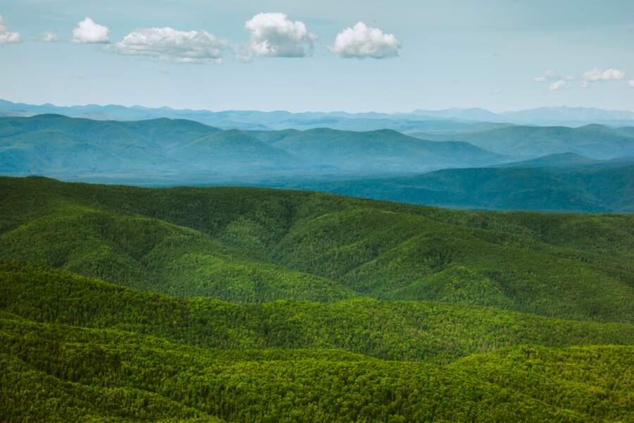 La Russie préserve 300 000 hectares de forêt