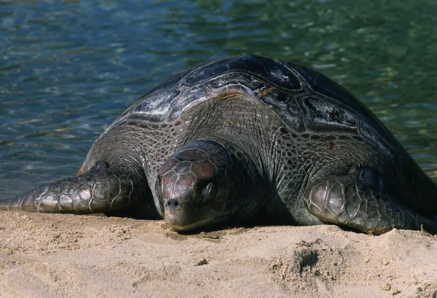 Un nid de tortues en voie d'extinction découvert en Equateur