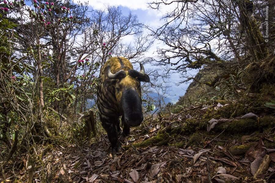 L'esprit du Bhoutan, Emmanuel Rondeau, France