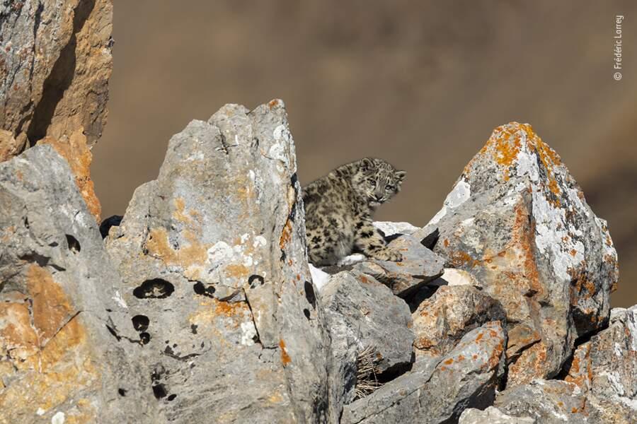 Bébé sur les rochers, Frédéric Larrey, France
