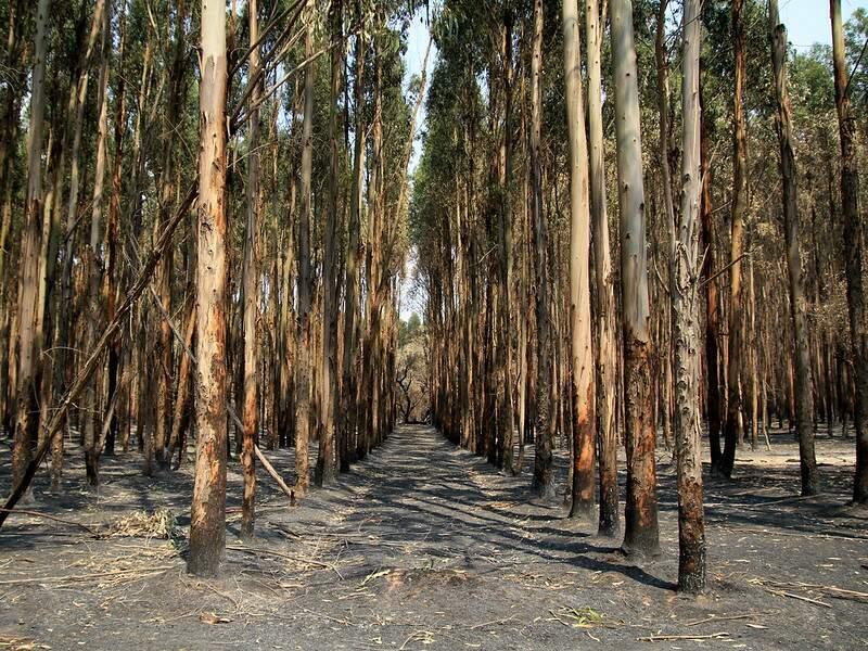 8,4 millions d'hectares de végétation réduits en cendre