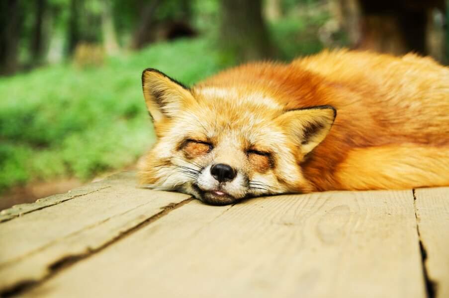 Du sommeil