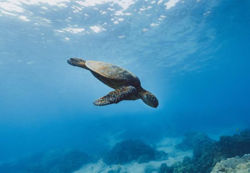 Une centaine de naissances de tortues