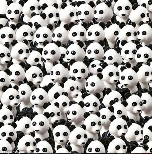 Où se trouve le chien parmi les pandas ?