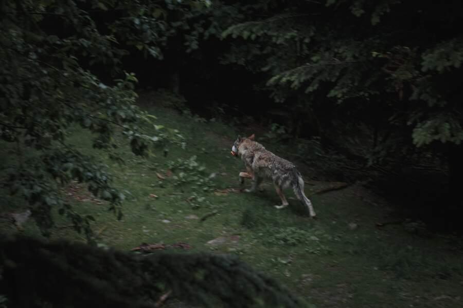 Jouer au loup-garou en ligne