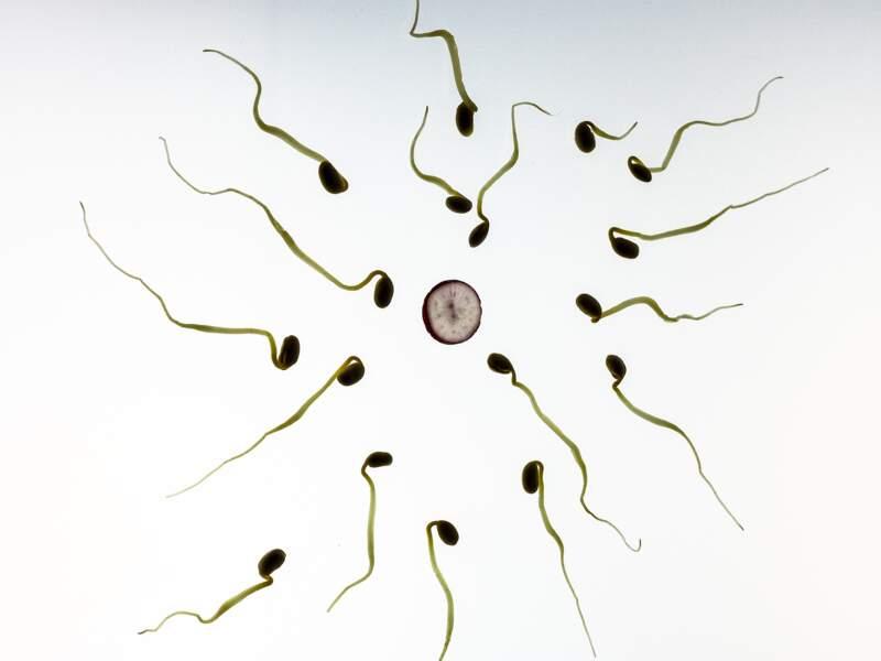 15 • Une baisse de la fertilité