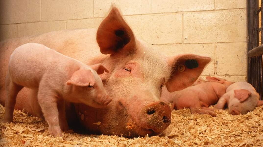 Le plan pour contre la souffrance animale