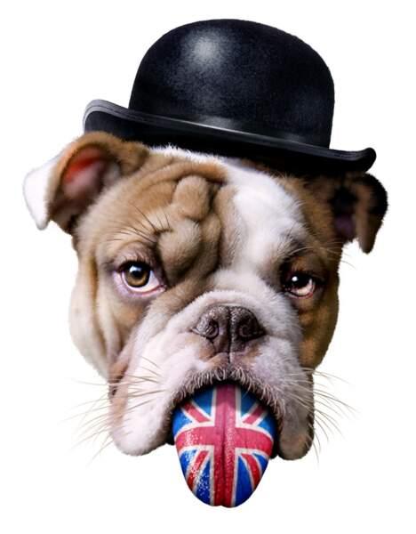 Tenace et combatif comme un bulldog anglais