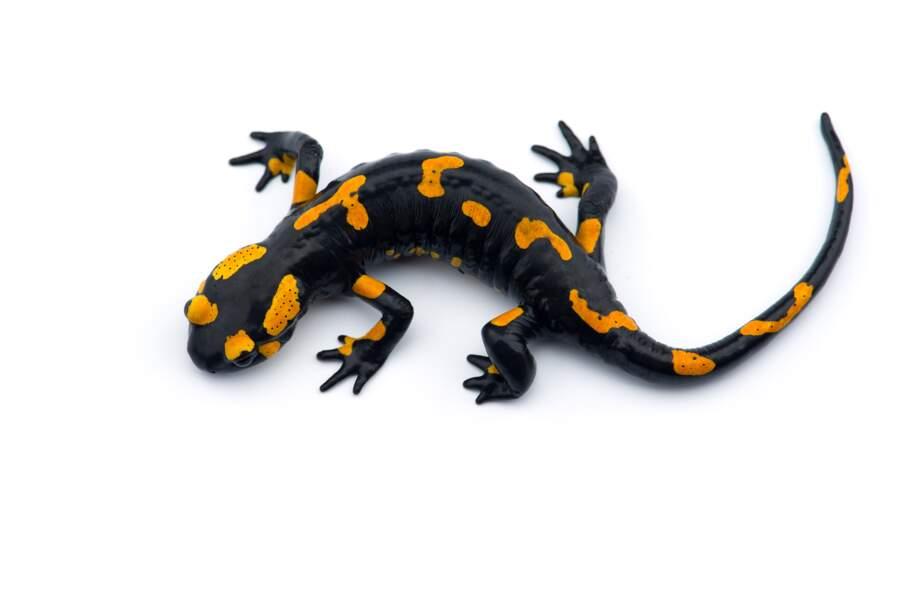 Une salamandre pour le roi de France