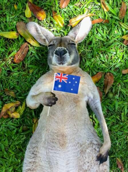 Heureux comme un kangourou en Australie