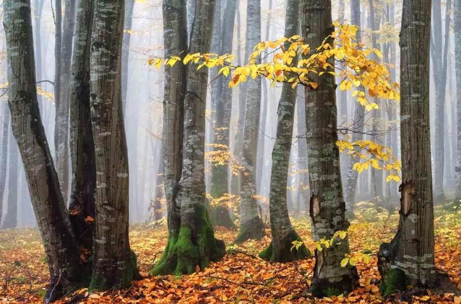 Forêt à la fin de l'automne