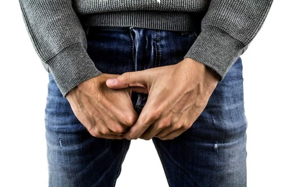 Les testicules : ils sont dotés de récepteurs gustatifs