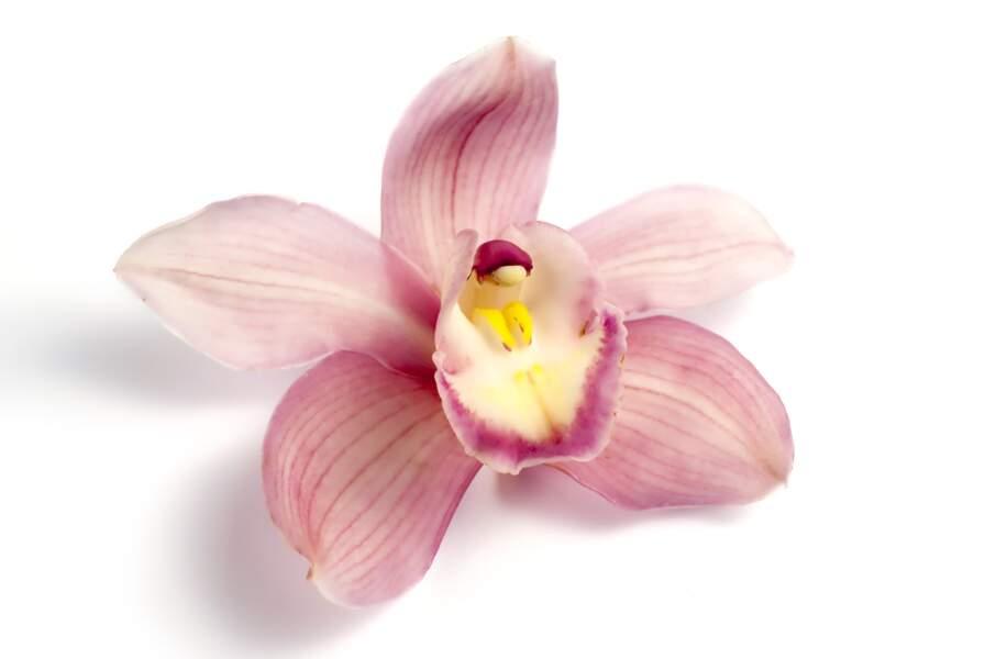 La légende érotique de l'orchidée