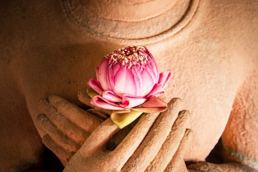 Le lotus, un modèle pour les bouddhistes
